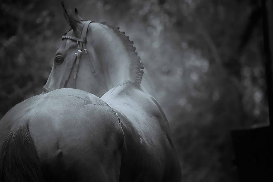 Equestrian Art Photography